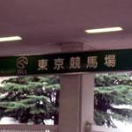 府中の東京競馬場