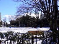 雪で真っ白の公園