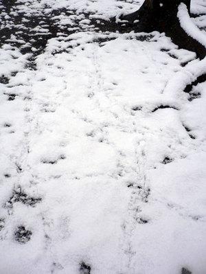 ハトの足跡