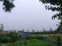 庭から見た空