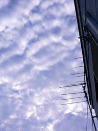 西を見るといわし雲