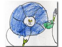 娘の描いた朝顔の花の観察画