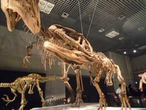 マプサウルス