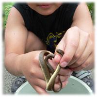 カナヘビを捕まえた!